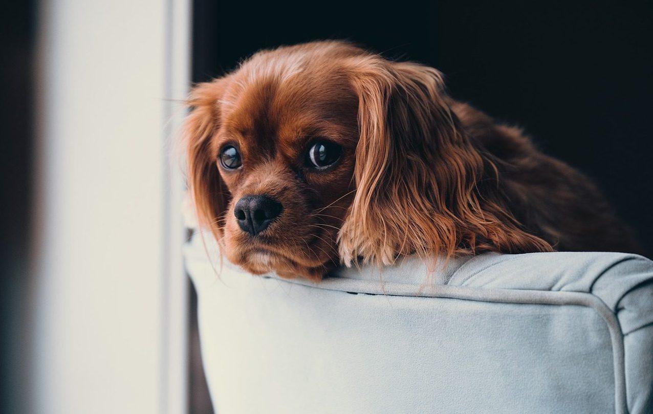 โรคติดต่อจากเชื้อไวรัสที่สำคัญในสุนัข