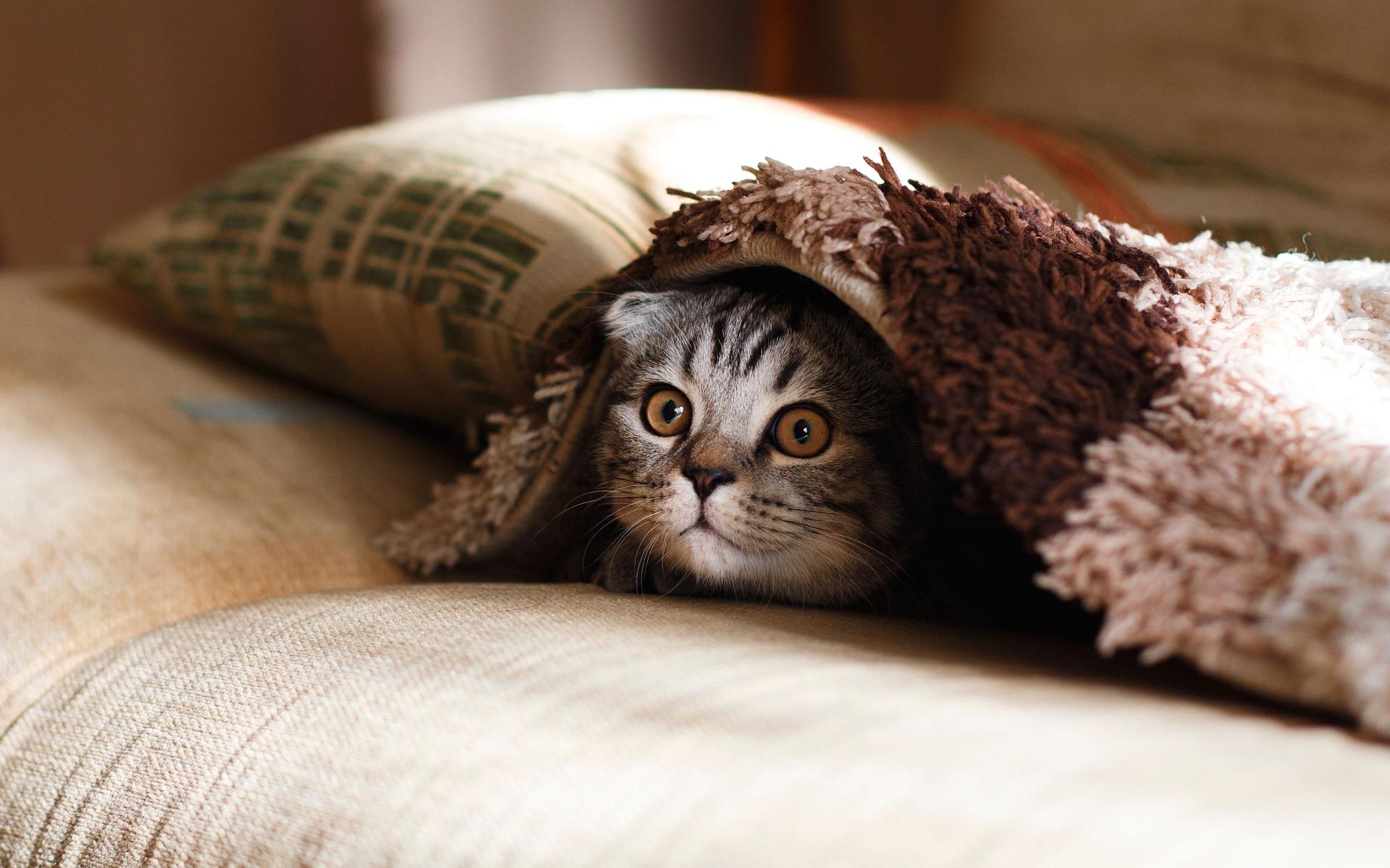 """""""โรคทางเดินปัสสาวะส่วนล่างในแมว (FLUTD)"""" โรคยอดฮิตของแมวตัวผู้"""