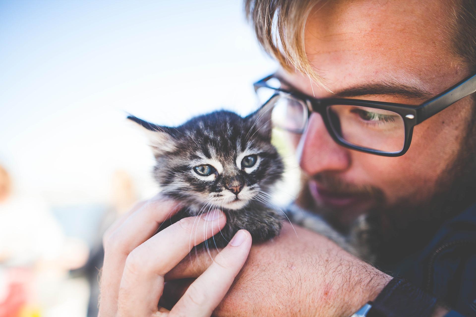 เหล่าทาสรู้ไหม…เล่นกับแมวอย่างไรให้ถูกหลักวิทยาศาสตร์