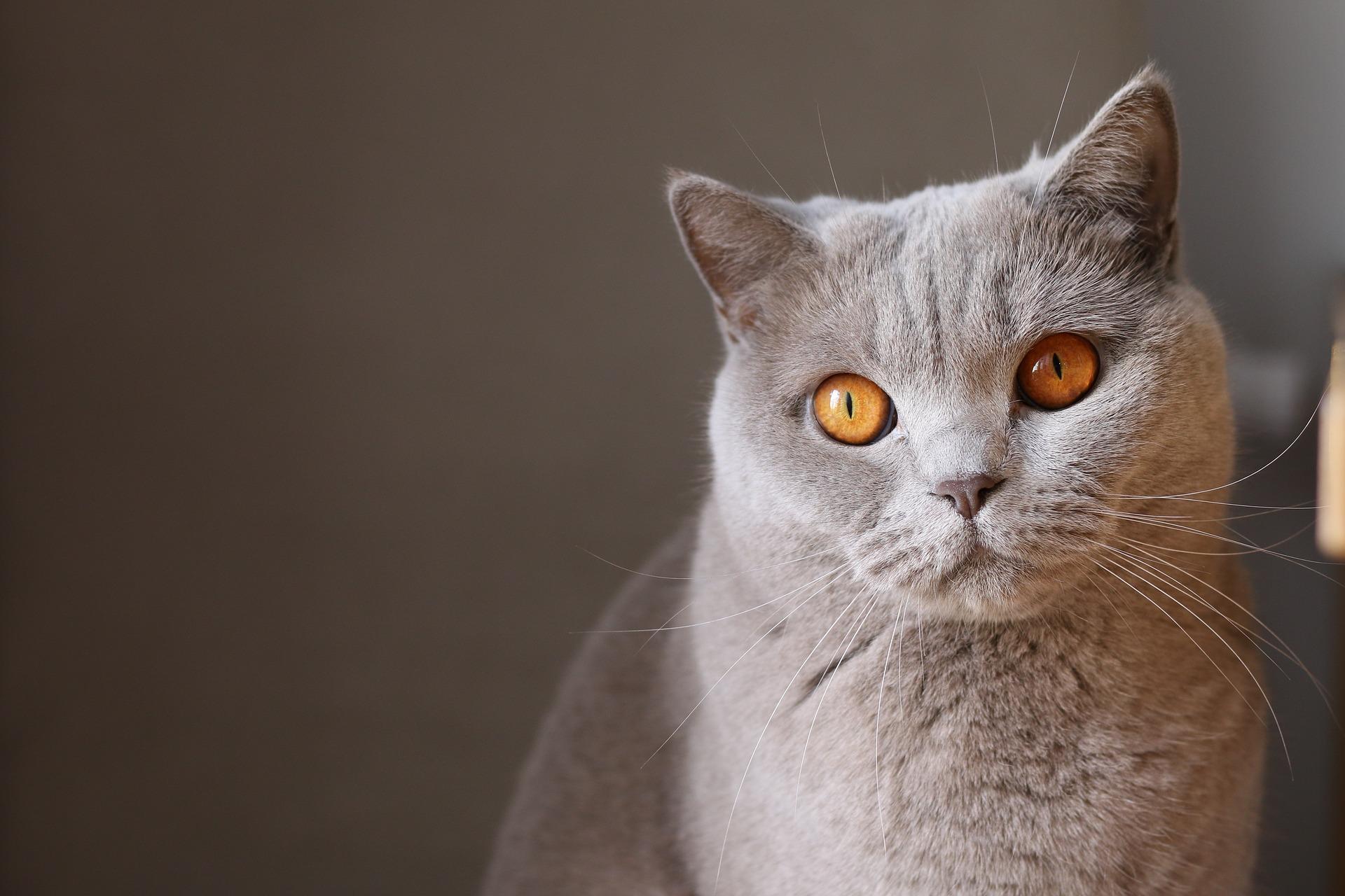 """""""ขี้หู"""" เรื่องที่ทาสแมวไม่ควรมองข้าม"""