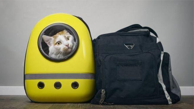 สายการบินรัสเซียจับพิรุธทาสแมวแอบนำแมวอ้วนเกินขนาดขึ้นเครื่องบินได้อย่างไร-bbcไทย
