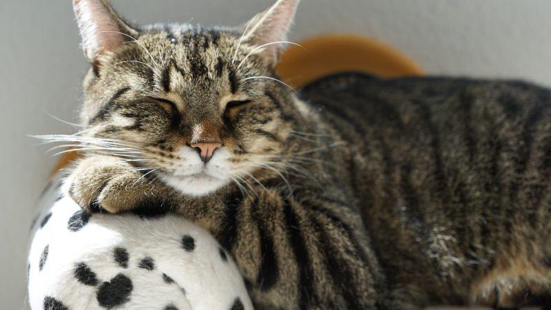 งานวิจัยเผยเพลงแบบไหนแมวชอบฟังเมื่อครั้งไปหาหมอ-BBCไทย
