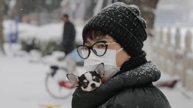ไวรัสโคโรนา: คนรักสัตว์ควรทำอย่างไร เมื่อเพื่อนตัวน้อยอาจติดเชื้อโรคโควิด-19-BBCไทย