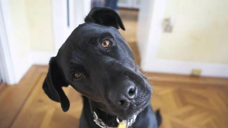 ผลสแกนสมองชี้ สุนัขเข้าใจภาษามนุษย์ได้น้อยกว่าที่เราคิด