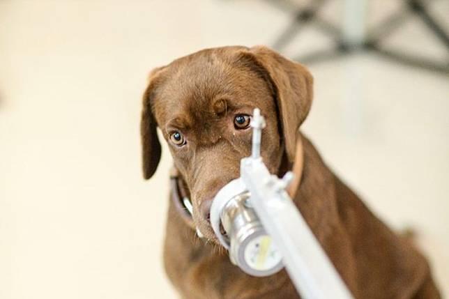 จุฬาฯ เผยผลทดสอบ สุนัขดมกลิ่นหาเชื้อโควิด จากคณะสัตวแพทย์ฯ