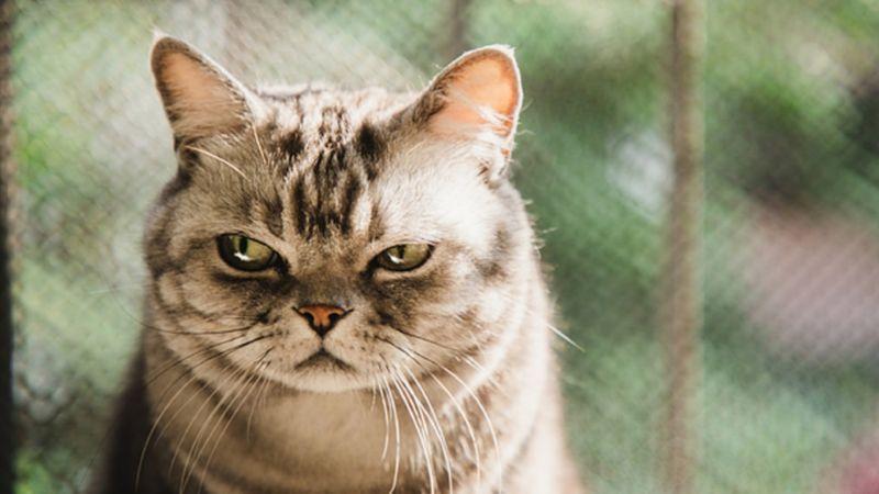 แมวบ้านต่างจากสัตว์เลี้ยงทั่วไป ไม่ยอมสนใจอาหาร หากต้องทำสิ่งเหนื่อยยากแลกมา