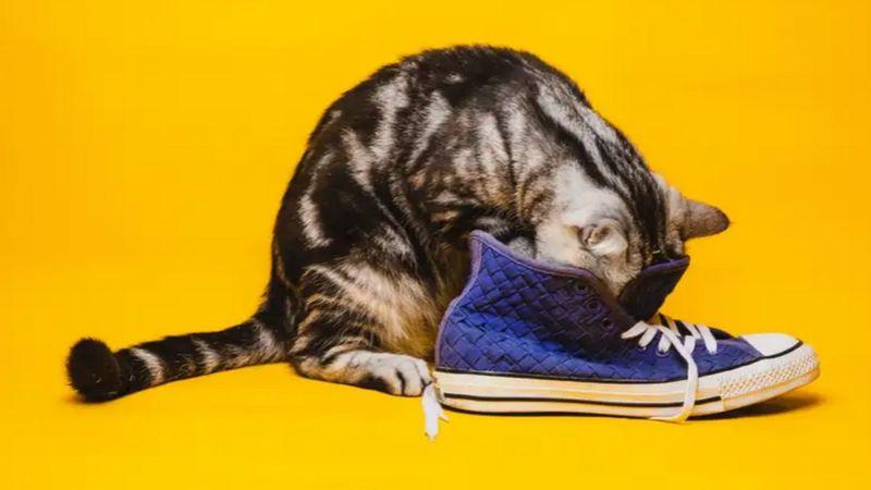 กลิ่นตัวทาสแมวที่ติดอยู่ตามสิ่งของ ไม่ช่วยให้น้องเหมียวหายคิดถึงเมื่อต้องห่างกัน